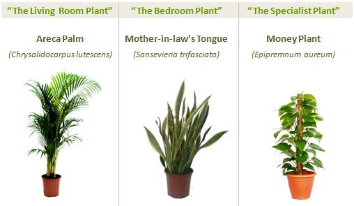 trois plantes purifier air
