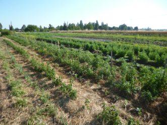 jardin plantes aromatiques et médicinales
